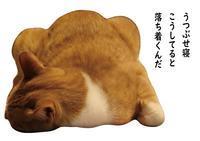 寝相 - ぎんネコ☆はうす