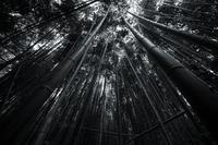 京都府京都市  2017.10.14 - 中部地方風景写真