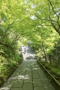 新緑の鎌倉長谷寺 - エーデルワイスPhoto