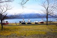 湖とアオゲラ - ひつじweblog