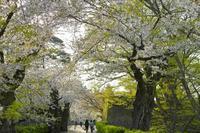 会津路の春 ~ 散るも良し鶴ヶ城址の桜花 ~ - あんだんて♪の、人生の忘れものを探しに・・・