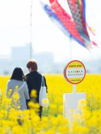 in Hana-Batake - 風まかせ、カメラまかせ