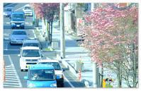 街路樹。 - Yuruyuru Photograph