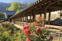 2018 奈良春の遠征-長谷寺- - さんたの富士山と癒しの射心館