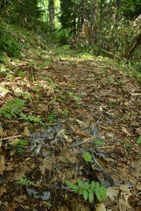 猛禽類の捕食痕 - こんなものを見た2