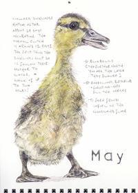 5月-マガモのひなが生まれる- - ブルーベルの森-ブログ-英国カントリーサイドのライフスタイルをつたえる