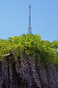 2018年 亀戸天神社行って来ました。藤まつりは5月6日までだけど…。 - あれも食べたい、これも食べたい!EX