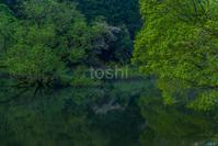 室生湖新緑と桜 - toshi の ならはまほろば