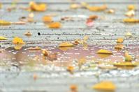 ドシャ降り雨 - お花びより