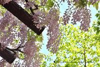 初夏の匂い - お花びより