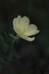 夜に咲く花 - ecocoro日和