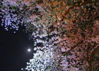 朧月夜 - 長女Yのつれづれ記