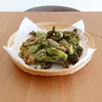 採れたてタラの芽で天ぷら - くくるタイムス from 信州
