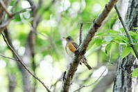 MFで出会えた鳥達 - 私の鳥撮り散歩