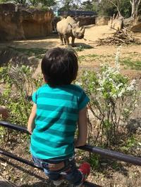 日曜日の動物園 - Slow Style KAZZ