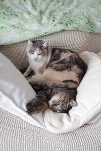 かわいいかわいい猫クッション♡ - きょうだい猫と仲良し暮らし