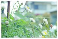 花かんざしって。 - Yuruyuru Photograph