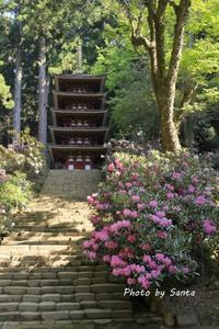 2018 奈良春の遠征-室生寺- - さんたの富士山と癒しの射心館