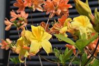 庭に咲いた花 - バードカラー