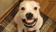 田村獣医師の『愛犬デンタルケアセミナー』 - はばたけ MY SOUL