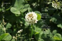 泉のごとく - 花の咲み、花のうた、きらめく地上 ―― photo&poem gallery kanon