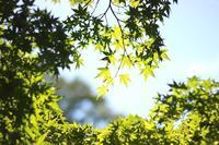 透き通る緑 - Vivid Image