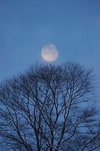 ぼんやりお月さんの朝 - 空ヤ畑ノコトバカリ