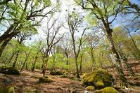 新緑のブナの森添谷山 - 峰さんの山あるき