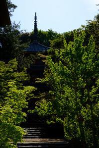井山宝福寺の新緑 - とりあえず撮ってみました