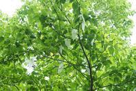 ★ 緑な日 - うちゅうのさいはて