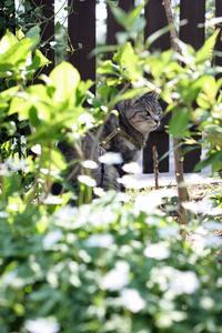 昨日のサラちん - 小さな森のキキとサラ