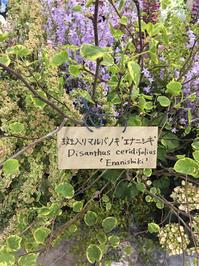日本フラワー&ガーデンショーへ - kukka  kukka