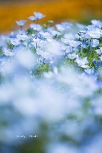 ブルーの世界♪ - Lovely Poodle