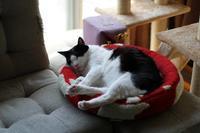 赤いベッド - Black Cat Moan
