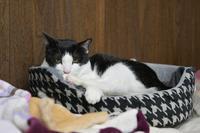 大きいベッド - Black Cat Moan