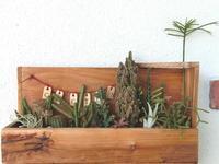 サボテンの寄せ植え - connie's