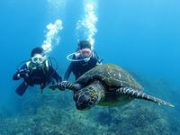 初めてのダイビングは、大成功なり~(^^)v - 八丈島ダイビングサービス カナロアへようこそ!
