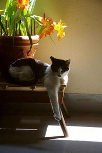 最近の猫事情49 - 鳥会えず猫生活