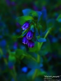 """bluish purple"" - ~まきち写真工房~"