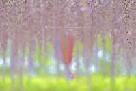 夏の色 - お花びより