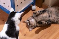 ふしぎ - 猫と夕焼け