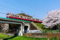 桜と赤電 - ロッキー温泉