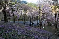 ※ 福島県・三島町・カタクリの群生(2)終 - 気まぐれ写真工房 new
