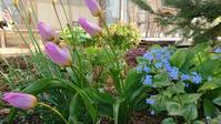 4月最後の庭 - 今から・花
