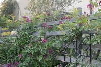 小輪の薔薇が好き - お庭のおと
