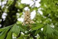 """ホリー(Holly)を見つける散歩&イギリスで植物を購入するにあたって - 英国メディカルハーバリスト&アロマセラピストのブログ""""Herbal Healing 別館"""""""