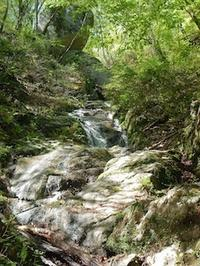 新緑のブナを求めて…おいわ山から長尾 - 山にでかける日