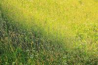 陰と陽 - Vivid Image