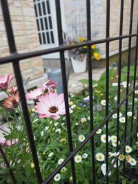 玄関の花 - グリママの花日記
