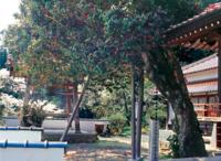 教西寺「椿まつり」へ - じのりのコーヒーブレイク